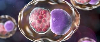 chlamydia-trachomatis