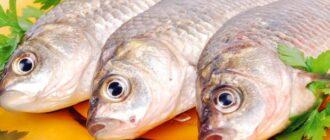 soliter-v-rybe-foto